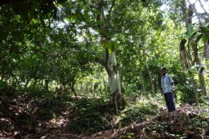 Producteur de cacao sur sa parcelle en République Dominicaine