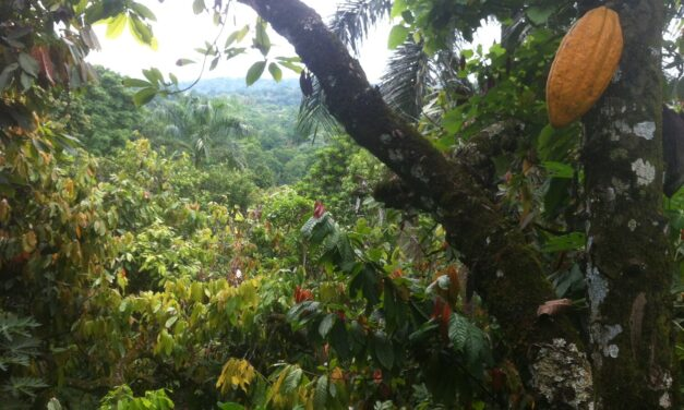 What is agroforestry?
