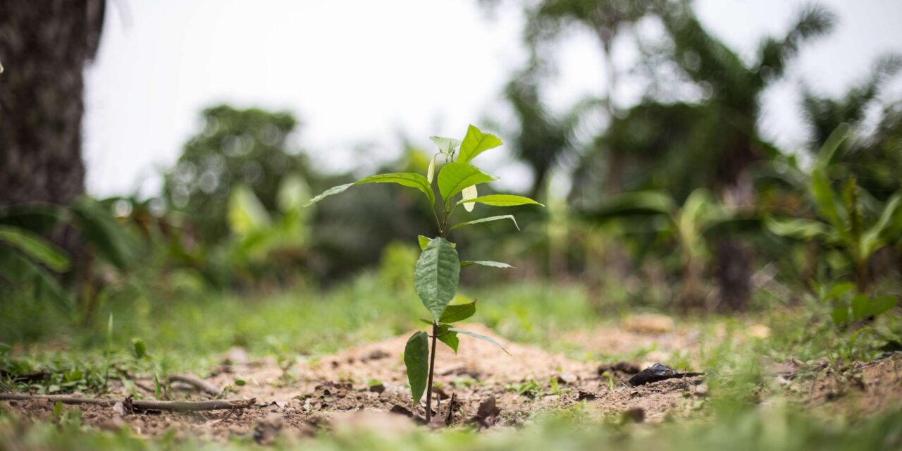 Best practices for teaching cacao agroforestry