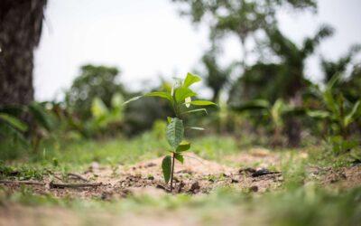 Comment enseigner la culture agroforestière du cacao?