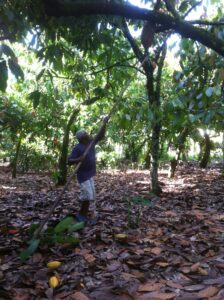 Le projet Cacao Forest