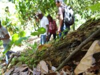 An interview with Alexandre, field coordinator in the Dominican Republic