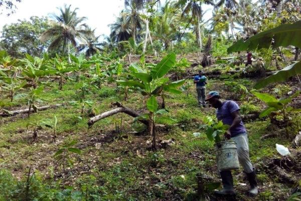 Culture du cacao durable et responsable